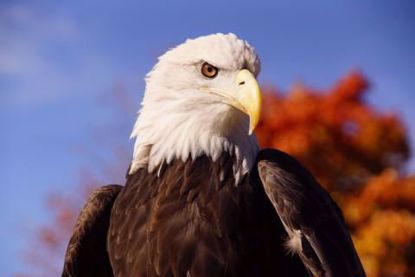 Picture of Eagle Zoomie Program